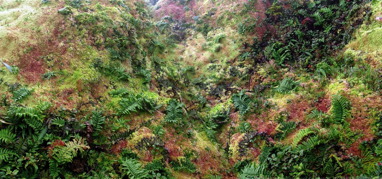 Les prodiges d'une terre volcanique sous climat tropical humide