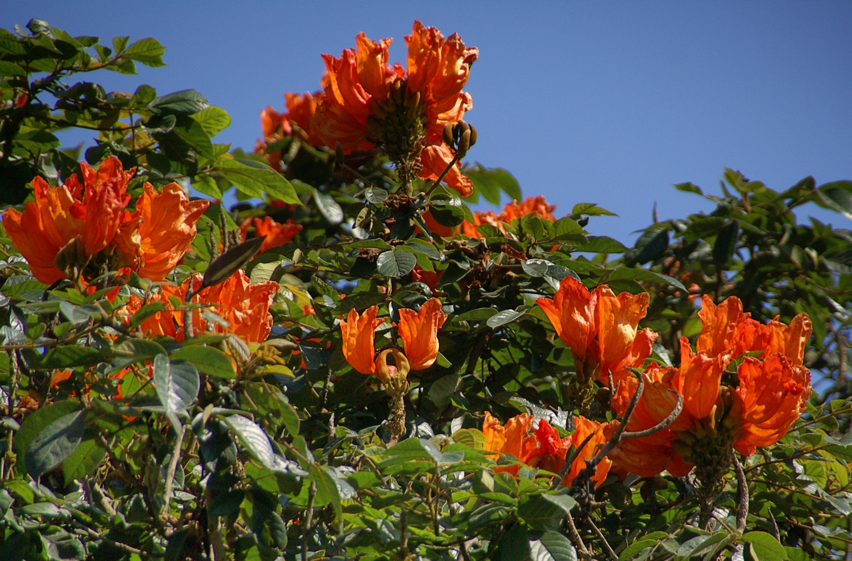 www.raconte-moi-une-image.com/quelles sont ces fleurs ?