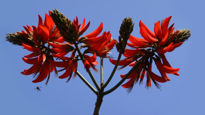 www.raconte-moi-une-image.com/quelles sont ces fleurs le long des chemins ?