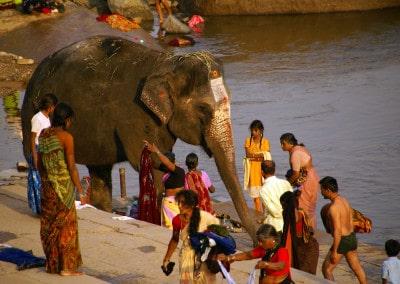 Toilette de l'éléphante du temple à Hampi