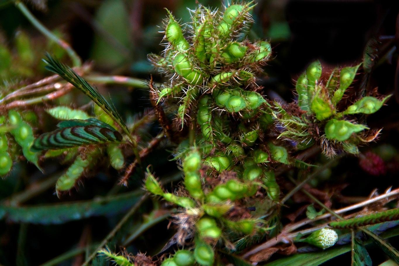 www.raconte-moi-une-image.com/pois sauvages mais comestibles