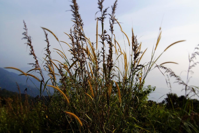 www.raconte-moi-une-image.com/sur les hauteurs de Ranipuram