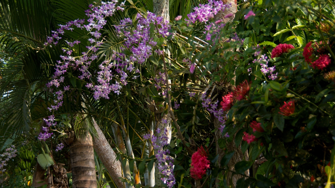 www.raconte-moi-une-image.com/orchidées le long  des backwaters