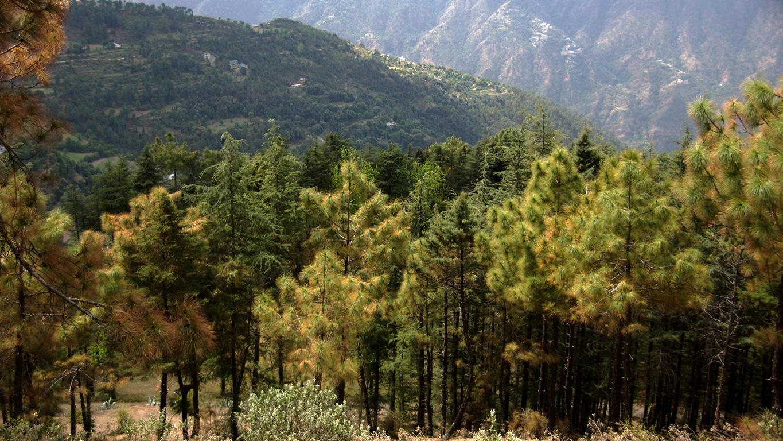 En ballade autour de Shimla