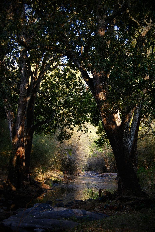 Abreuvoir naturel dans la jungle au Tamil Nadu