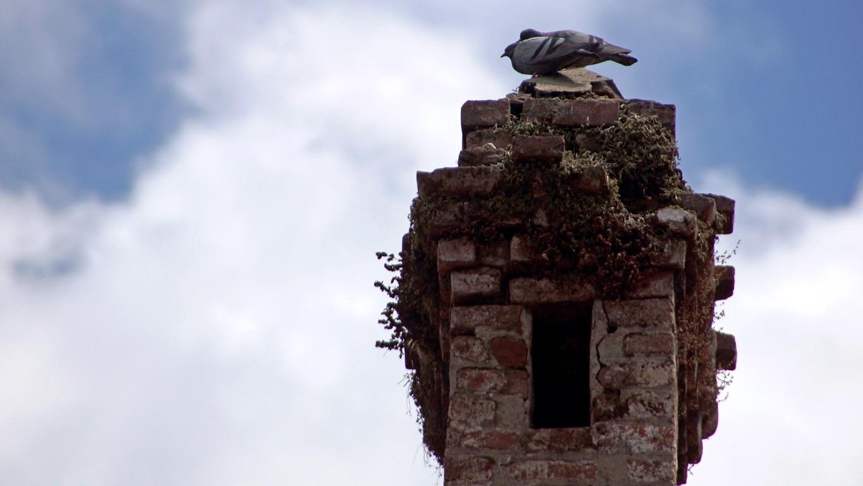 Deux pigeons s'aimaient d'amour tendre (Naldhera)