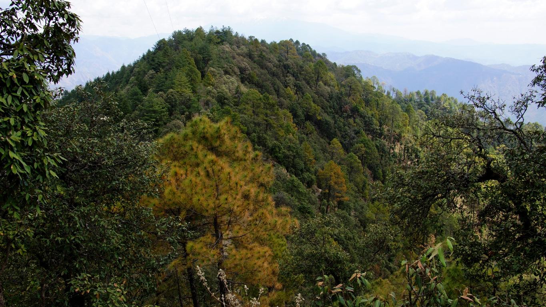 Paysage de montagne aux environs de Shimla