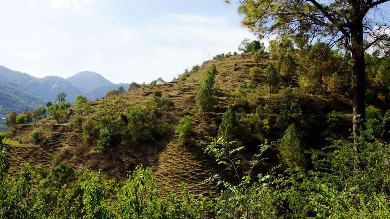 En bordure de route, entre Renukaji et Shimla