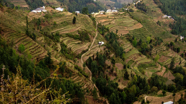Cultures en terrasses aux environs de Narkanda (Himachal Pradesh)