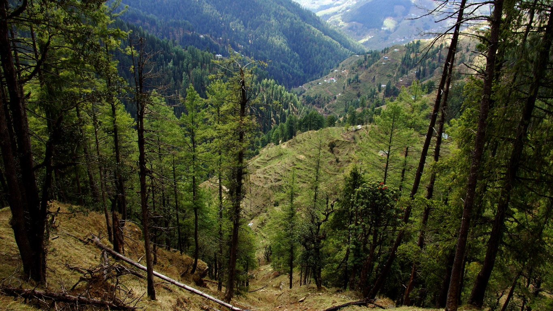 Environs de Narkanda (Himachal Pradesh)