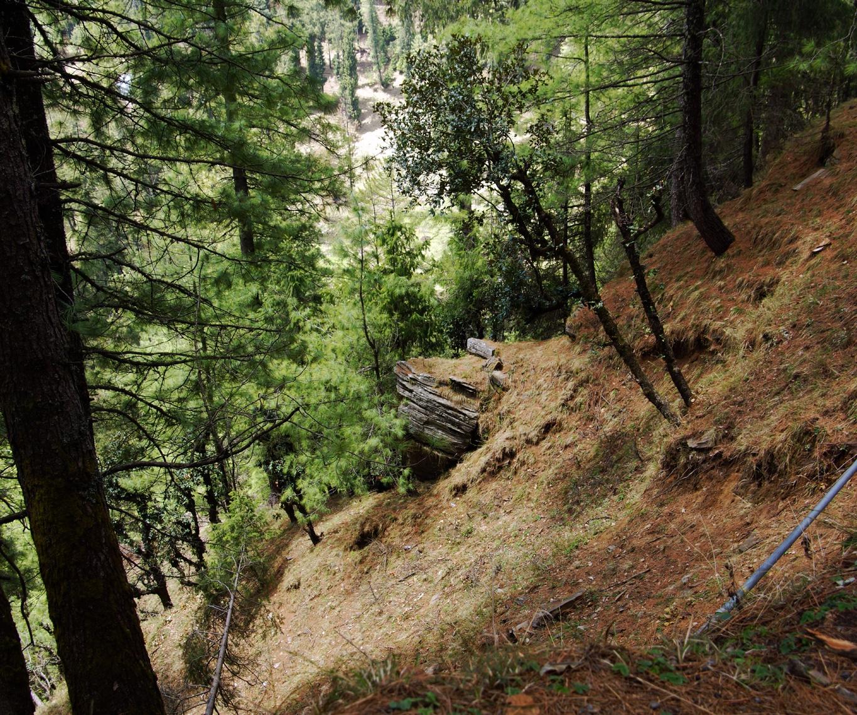En montant sur Hatu peak (Narkanda, Himachal Pradesh)