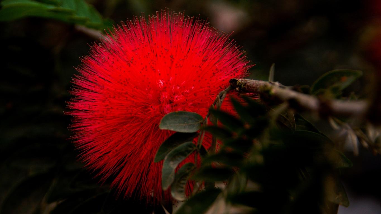 www.raconte-moi-une-image.com/fleur-plumeau San Angelo Fort Kannur