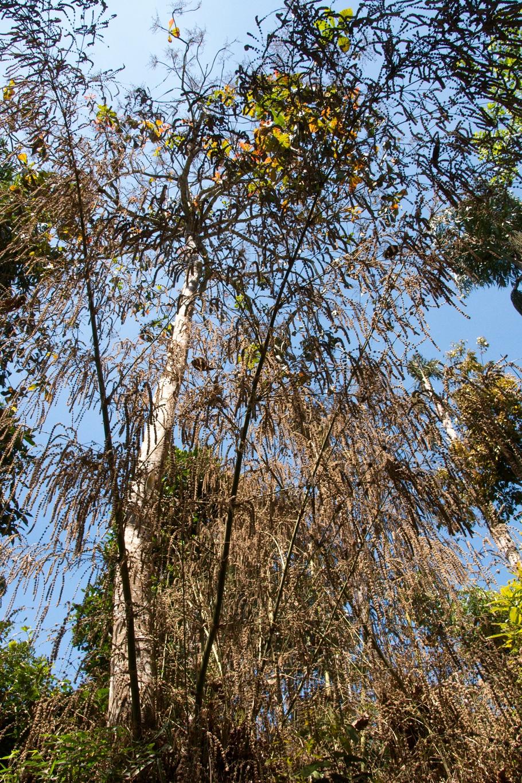www.raconte-moi-une-image.com/fleurs de Bambous dans le Karnataka
