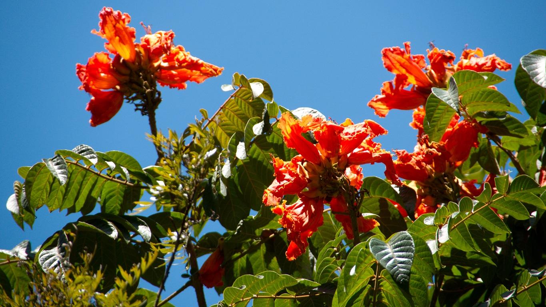 www.raconte-moi-une-image.com/toujours ces fleurs inconnues dans le Karnataka