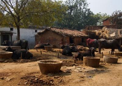 Village aux environs de Varanasi