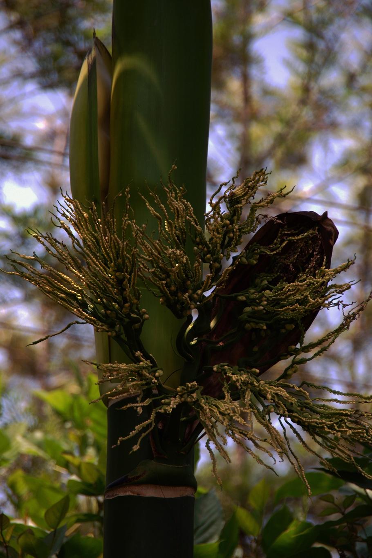 www.raconte-moi-une-image.com/fleur/fruit non comestible utilisé pour les offrandes dans le Karnataka