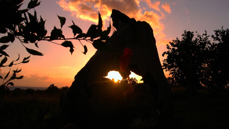 L'union de l'hibiscus et du soleil en fin de journée