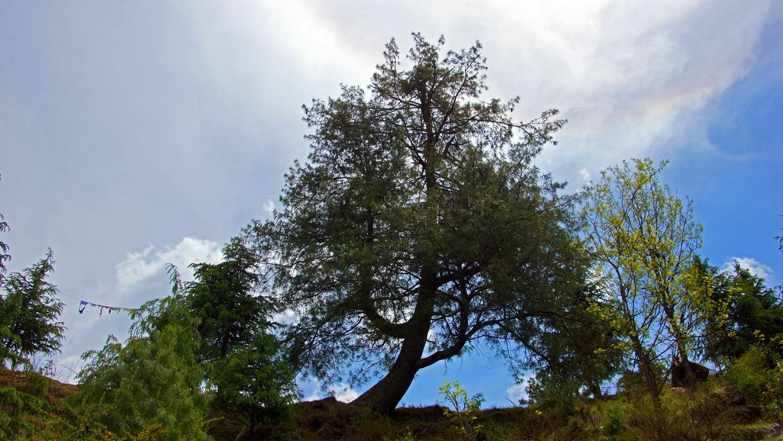 www.raconte-moi-une-image.com/l'arbre dans le roc dans l'Himalaya